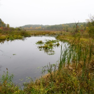 A small swampy clearing in Southern Michigan