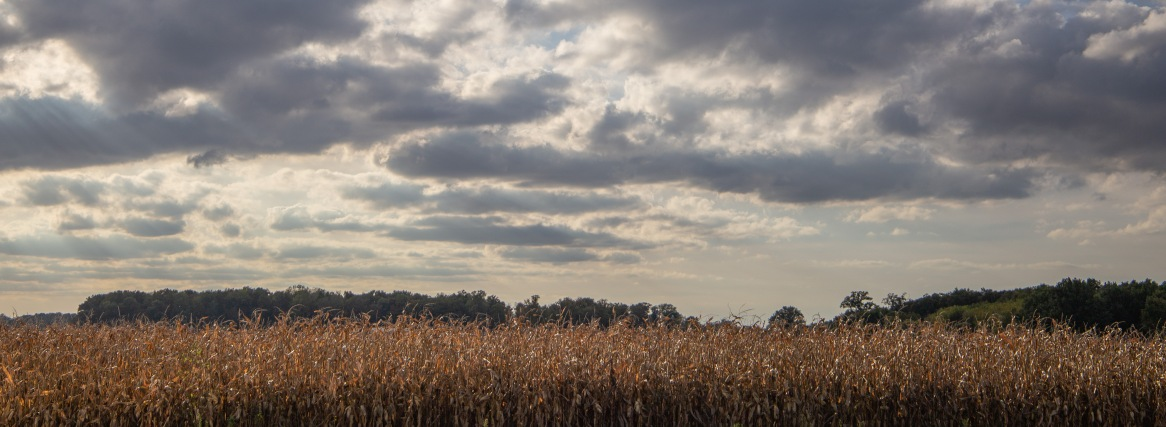 A storm rolls in over the corn fields on Bob Suter's farm.