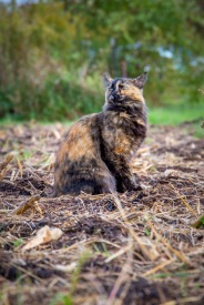 This camouflaged cat was a cuddly friend, rubbing up against the legs of all the workers on the farm as they weeded and harvested vegetables.