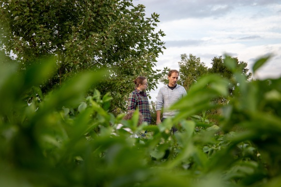 Jonah Agner and Nancy Corle Agner, members of the cooperative, walk through the fields looking for produce to harvest.