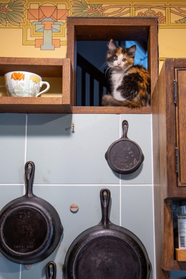 Wendy's cat perches in a little window above the kitchen.