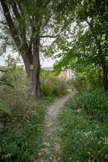 For Wendy, this lush old alleyway illustrates nature's desire to heal itself.