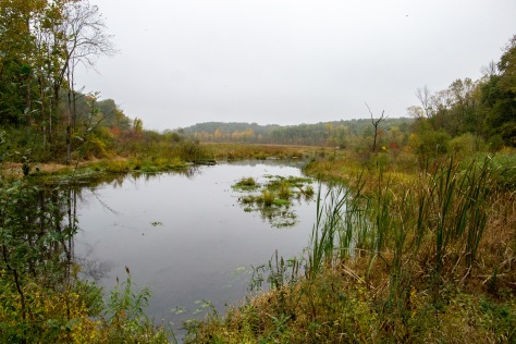 Camp Friendenswald has several fens on their grounds--a fen is a unique type of wetland, home to a wide variety of plant and animal life. The camp has preserved these ecosystems and uses them as part of their educational programs.
