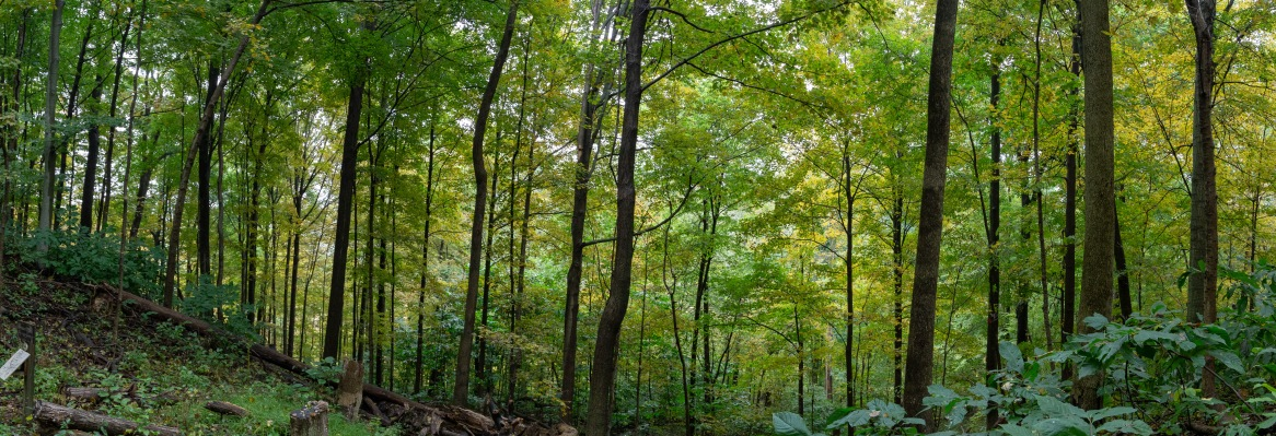 This panorama was taken on one of the many hiking trails that weaves through camp.
